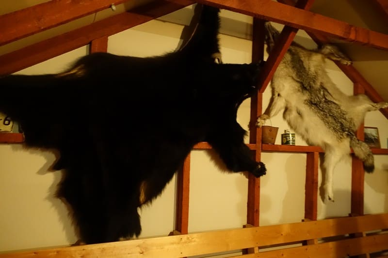 Bear and Wolf Skin mounted on the wall in the Trading Post