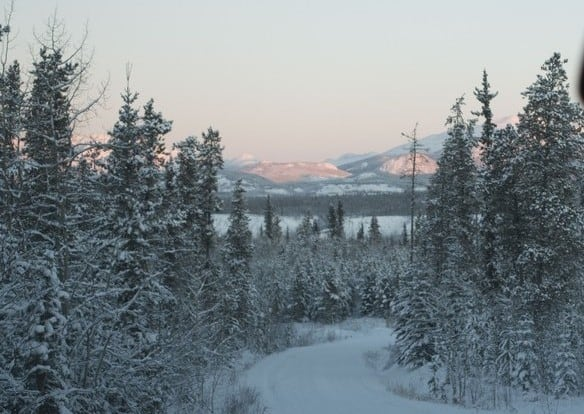 Stunning view all around as we maneuver our dog sleds through these snowy forests and stunning mountain scapes
