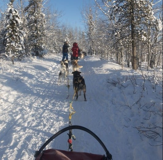 The stunning sight with the sunlight shining through the forest as we dog sled along
