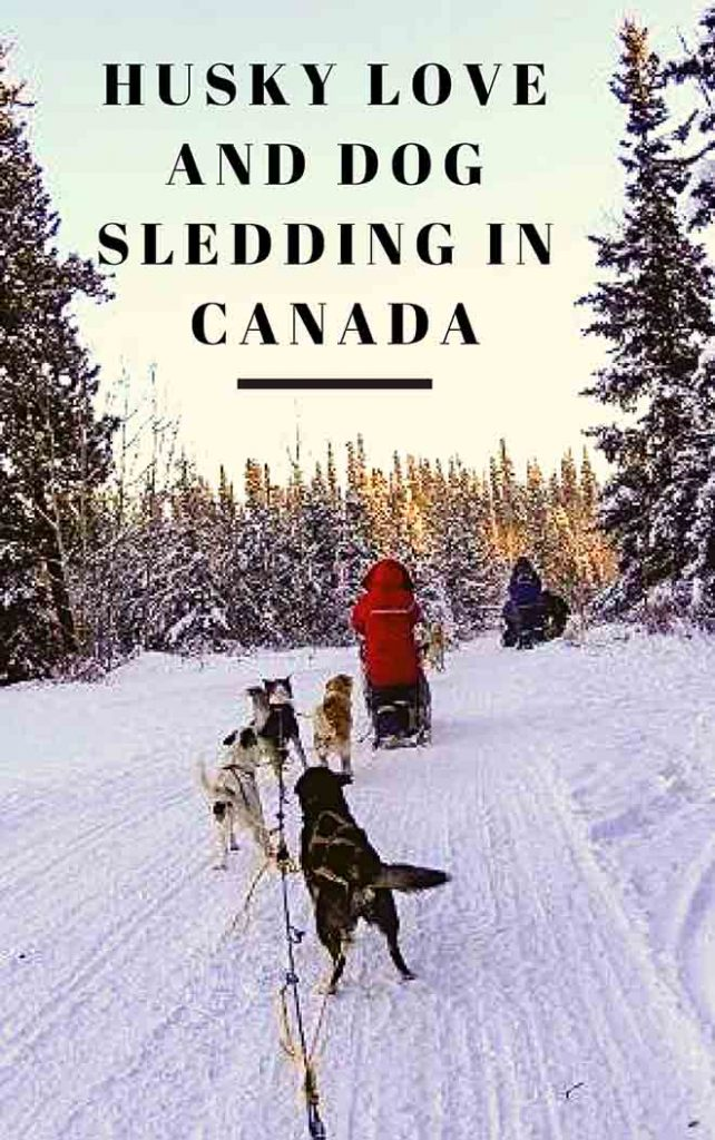 Husky love and dog sledging in Canada
