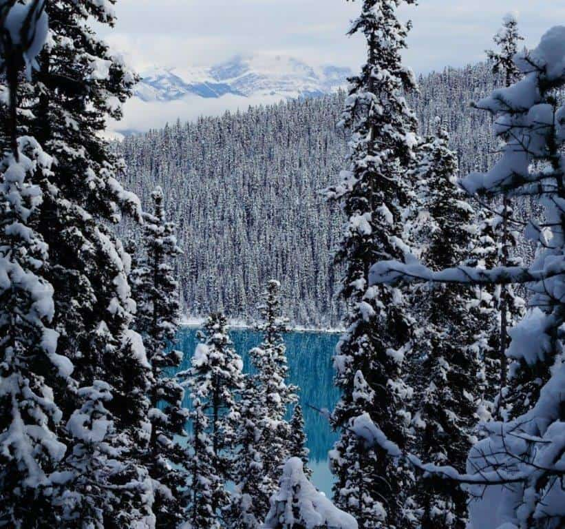 Gorgeous Blue colour of Lake Louise through the trees on the trek | Hiking Trails in Banff Alberta