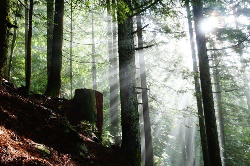 Sunshine bursting through the trees on the Grouse Grind Trail | Walking Trails