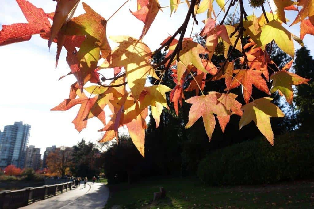 Sunshine with the beautiful autumn colours in Stanley Park