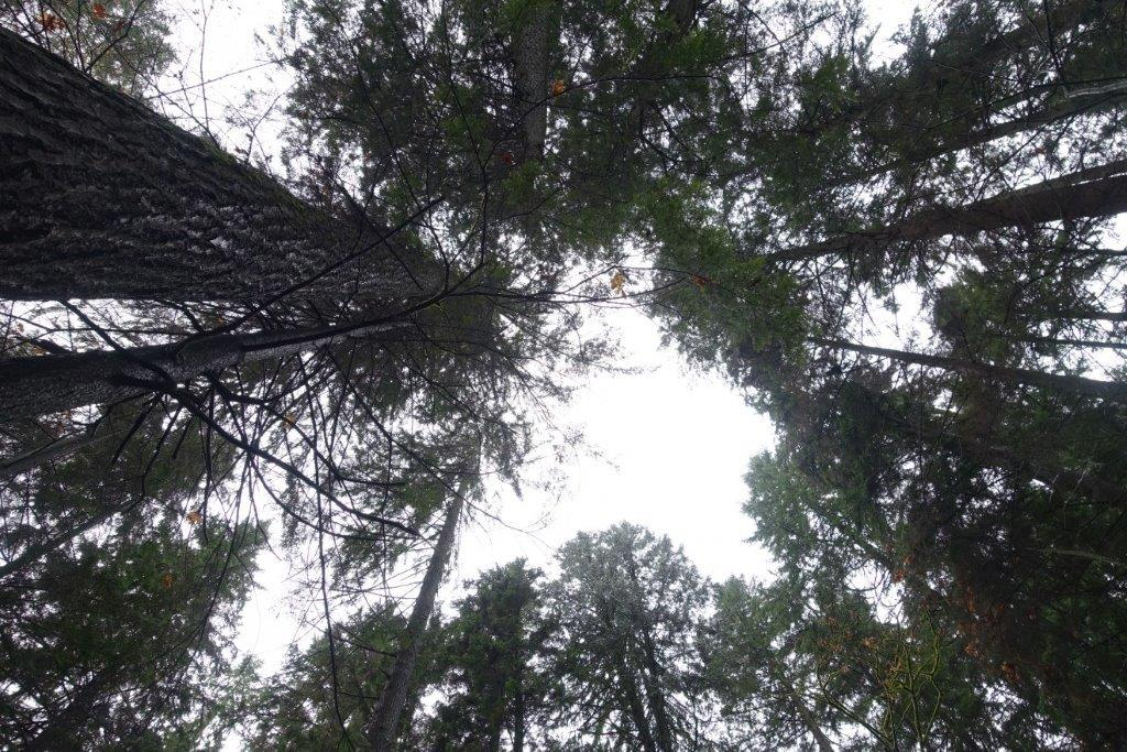 Under the Canopy of Trees along the trail to Quarry Rock Lookout Point | Day Hikes in British Columbia