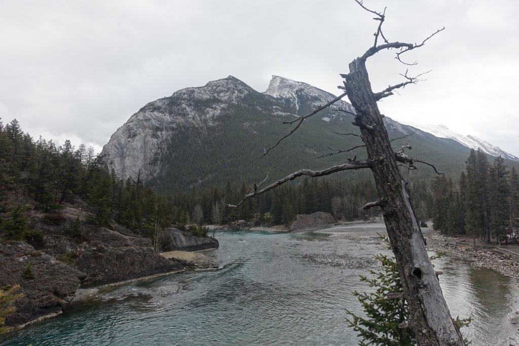 View of the Bow Falls stream as you trek along | Walking Trails in Canada