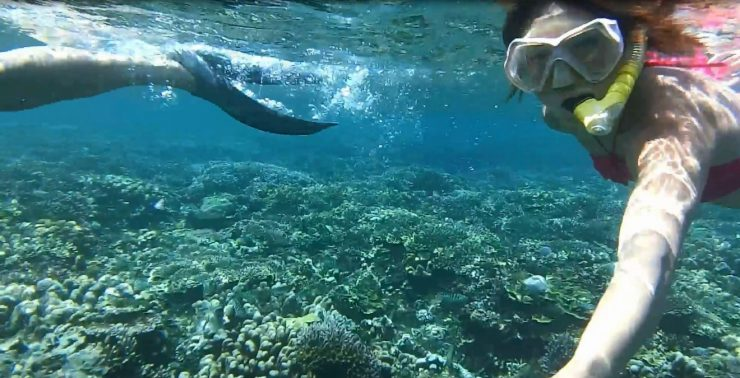 Bali Outdoor Adventure - Snorkeling in the beautiful clear waters with stunning coral and marine life