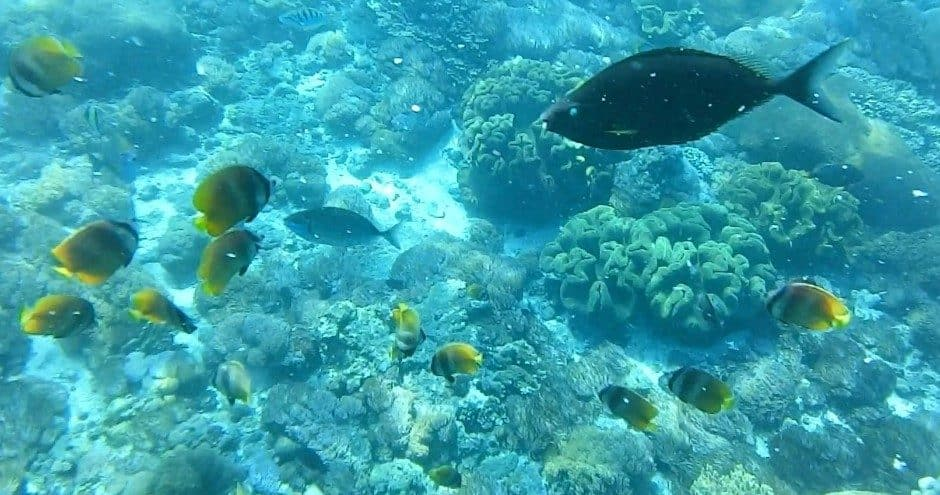Fishes coral and crystal clear water of Crystal Bay Nusa Penida Indonesia