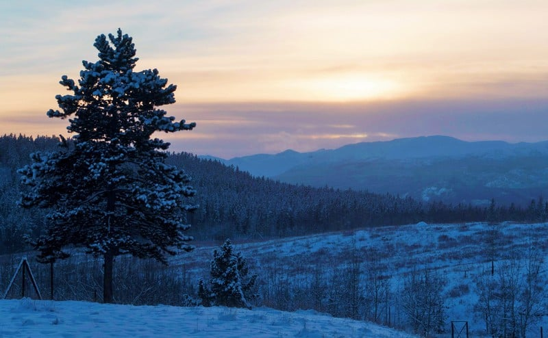 winter wildlife of whitehorse - sunset in Whitehorse Yukon is truly stunning