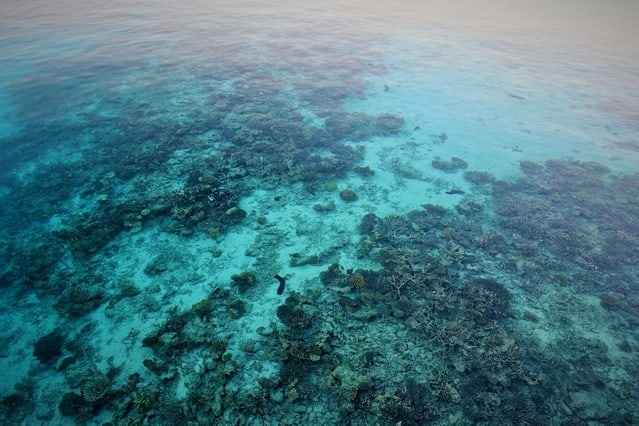 Maldives Marine life and water - blue and clear for snorkeling. Maldives Beach Paradise | Island life at its best