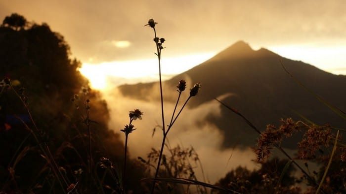 Wild flowers and clouds at the mt rinjani crater rim | Lombok indonesia mountains
