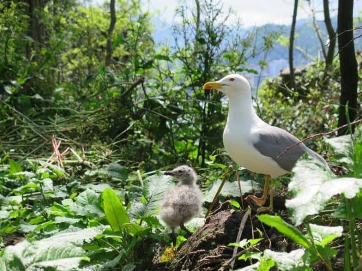 The Seagull Haven - Mom and her baby seagull just chilling out on the island of Giresun