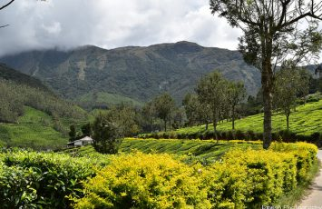 6 Exotic Hill Stations in Kerala Kera That Will Mesmerize You