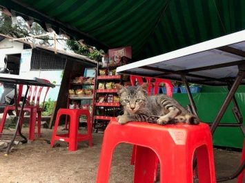 Lazy kitty chilling out at the little coffee shop selling drinks and snacks
