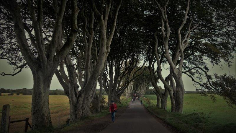 Game of Thrones Tour - Dark Hedges Arya Escape | Curvy Trees and Straight Roads | game of thrones bus tours
