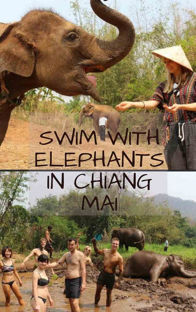 Swim with elephants in Chiang Mai