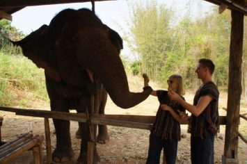 Feeding the elephants | Thailand Elephant Tour