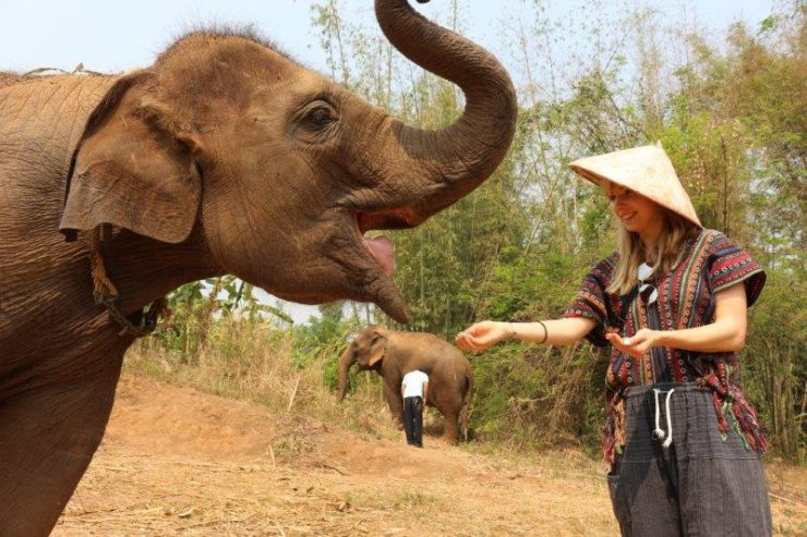 Feeding them happy elephants | Elephant Sanctuary Thailand