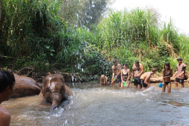 Splashing good time with the 2 gorgeous elephants | Washing and Swimming with Elephants