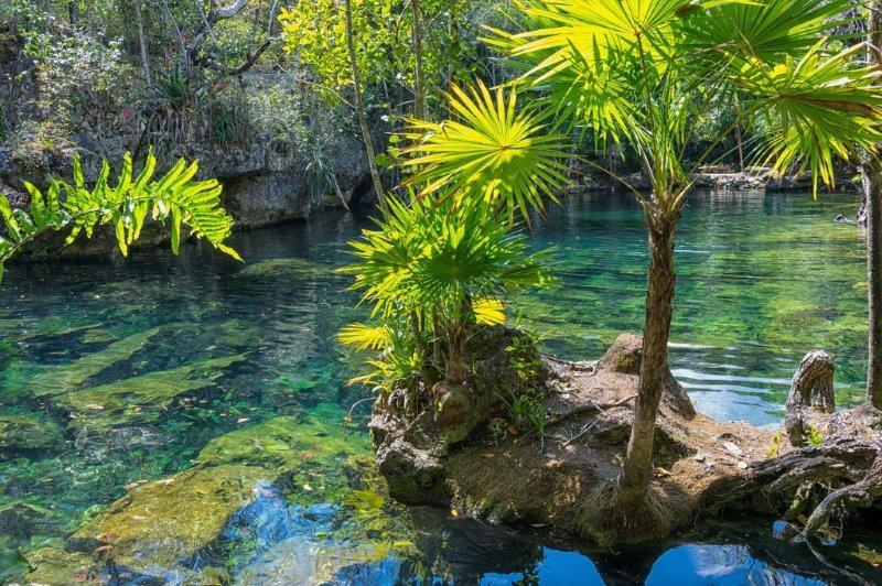 Cenotes and flora of Yucatan Peninsula
