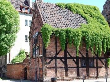 House covered in stunning ivy in Gdansk