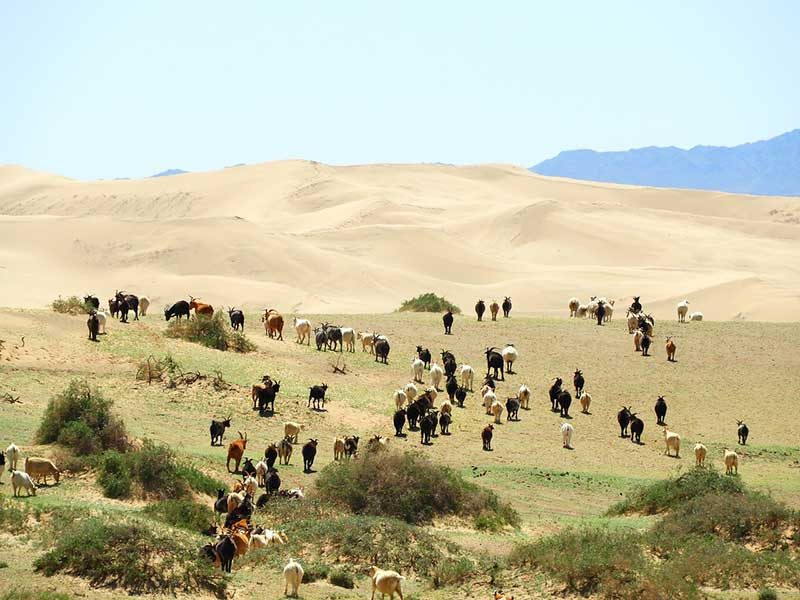 Green patches in Gobi desert