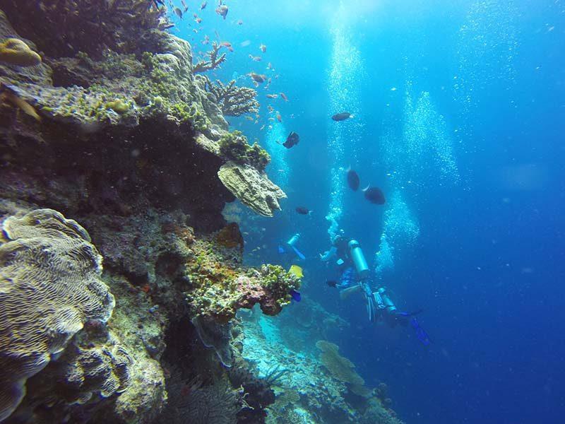 Scuba diving Borneo island