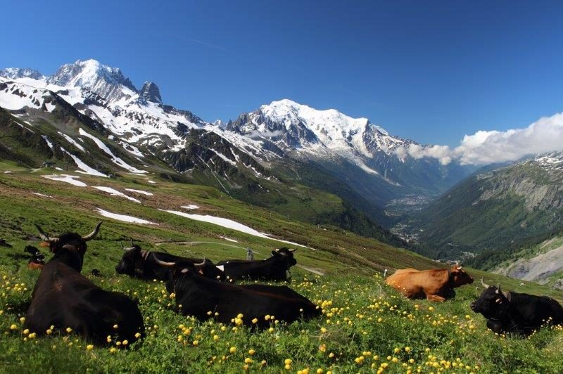 Chamonix Mont Blanc beauty in the heart of spring