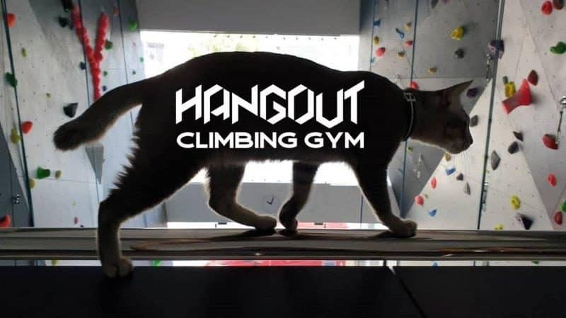 Ultimate List of 17 Rock Climbing Gyms in Malaysia