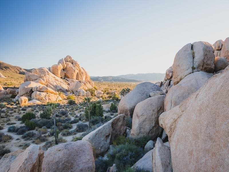 The infinite rock of Joshua Tree.