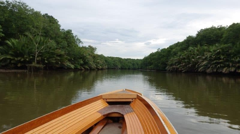 explore the beautiful mangrove rainforest.