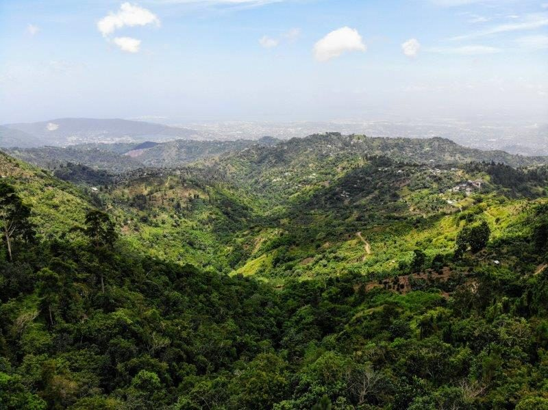 Blue Mountains of Jamaica, not Australia
