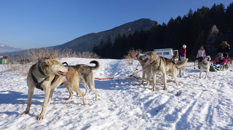 Husky Sledding in Europe