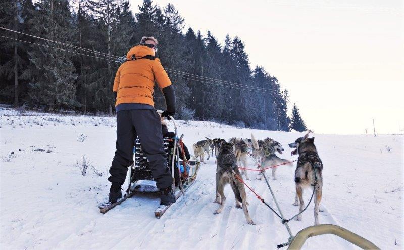 Dog sleds Slovakia