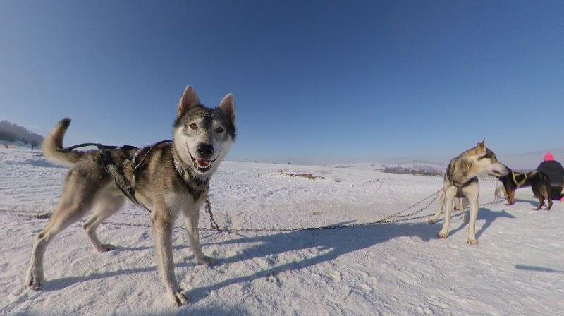 Dog Sledding in Europe