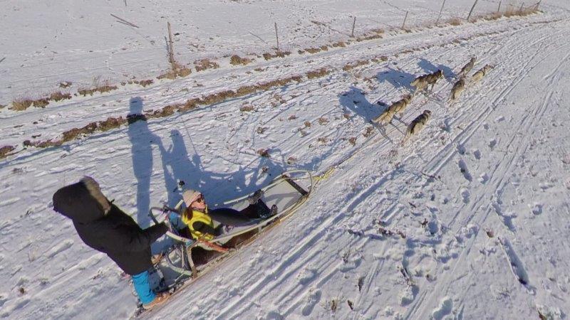 dog sled in Slovakia