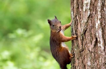 Squirrel Finger Grip